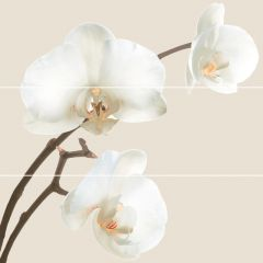 Панно Decor Orquidea (comp3pz) C-5 75*75